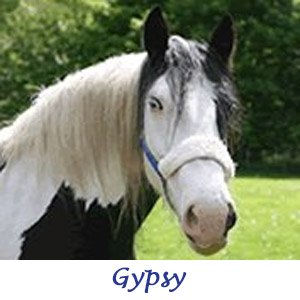 In Memory of Gypsy 1995 - 2017